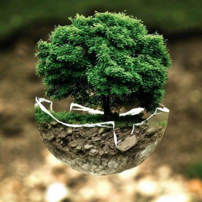500 milhões para projectos ambientais - Unsplash Photo