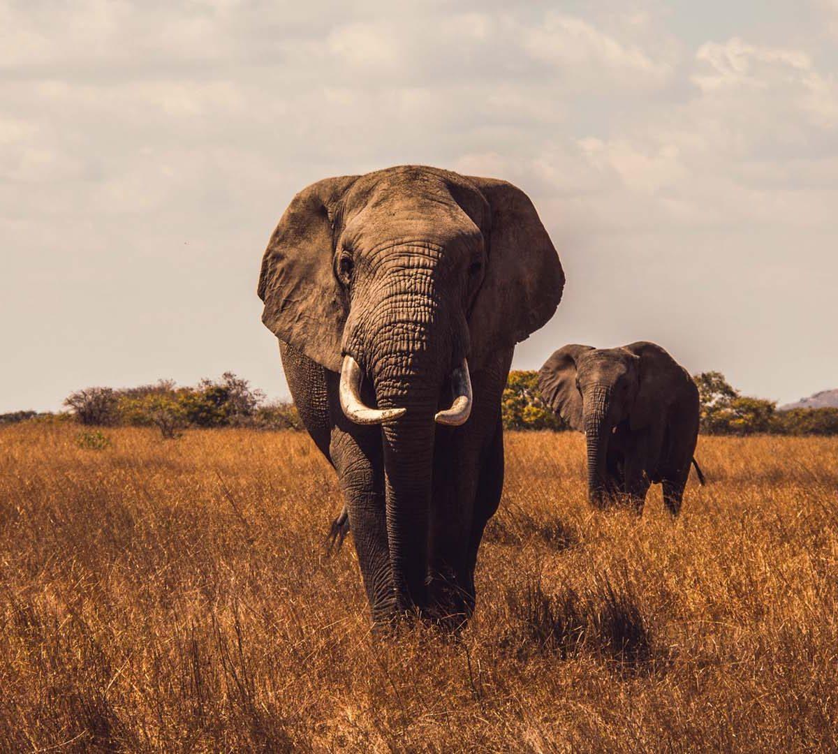 Nova Extinção em Massa