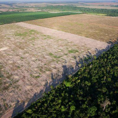 Desflorestação da Amazónia